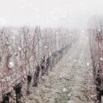 La nieve, la mejor aliada para el vino. - D.O. Arlanza